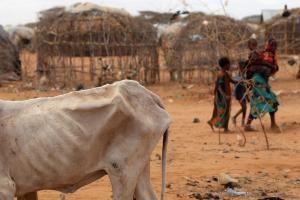 A severe drought in Kenya has led to a spate of attacks on ranches by herders